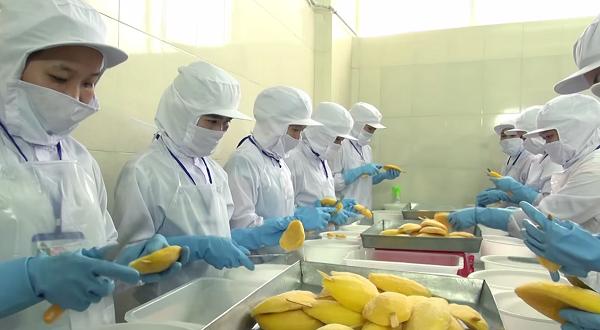 [xkldquocte] Xuẩt khẩu lao động Nhật Bản - Tuyển 20 nữ đi đơn hàng đóng hộp hoa quả tại KANAGAWA - Nhật Bản 2019