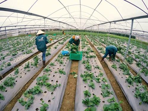 [xkldquocte] Xuẩt khẩu lao động Nhật Bản - Tuyển 20 nữ đi đơn hàng trồng rau trong nhà kính tại Kumamoto - Nhật Bản 2019