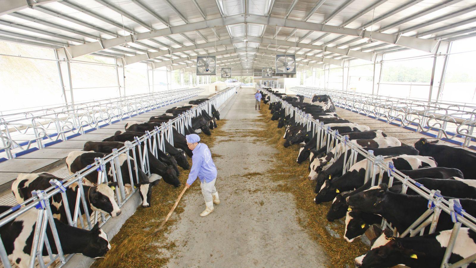 [xkldquocte] Xuẩt khẩu lao động Nhật Bản - Tuyển 25 nữ đi đơn hàng chăn nuôi bò sữa tại Hokkaido - Nhật Bản 2019