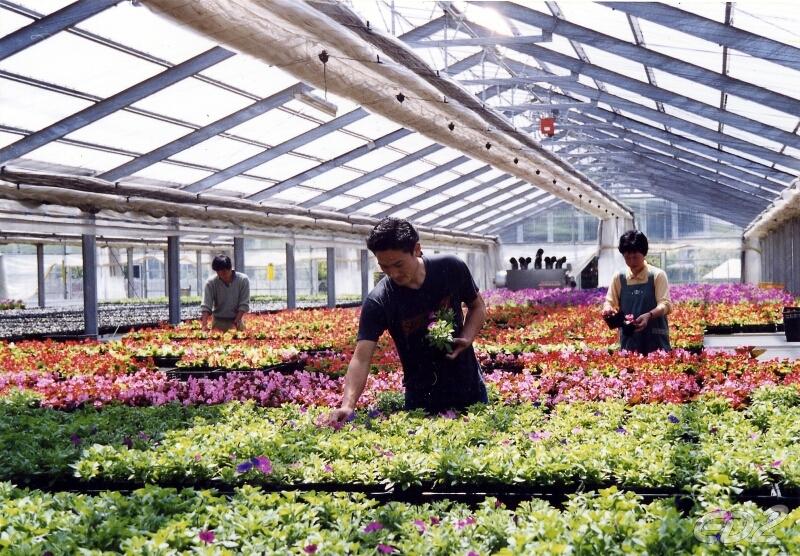 [xkldquocte] Xuẩt khẩu lao động Nhật Bản - Tuyển 9 nam, 9 nữ đi đơn hàng trồng hoa nhà kính tại Chiba - Nhật Bản 2019