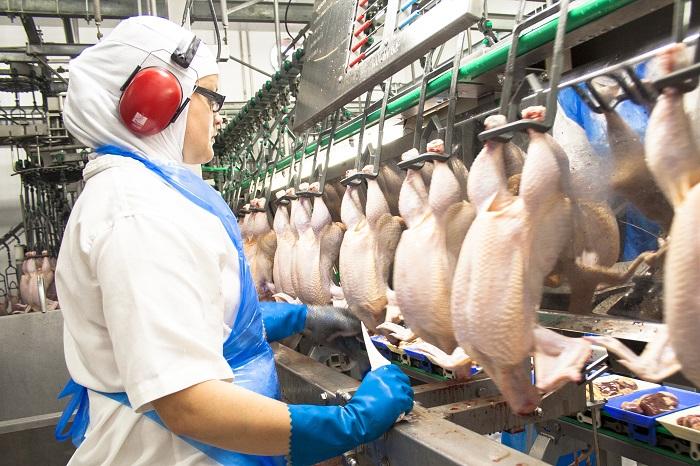 [xkldquocte] Xuẩt khẩu lao động HUNGARY - Tuyển 15 công nhân nam nữ cho nhà máy chế biến thịt gà hungary 2019